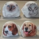 Cani, gatti e spicci.